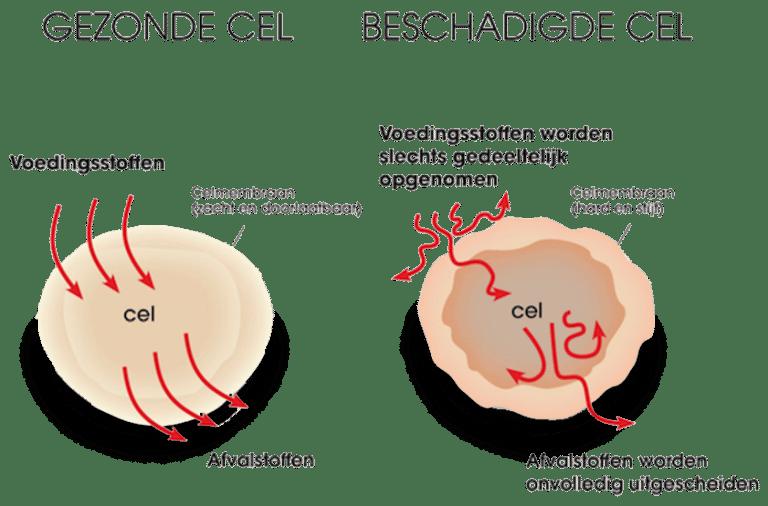 eqology-gezonde-en-beschadigde-cellen